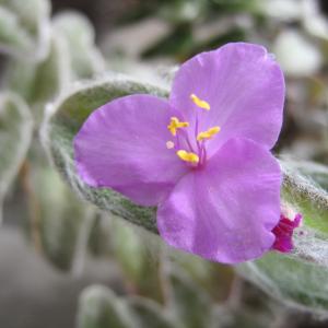 今年も白雪姫のお花が咲きました○お花とフェアリーのお話①~並木良和さん~○
