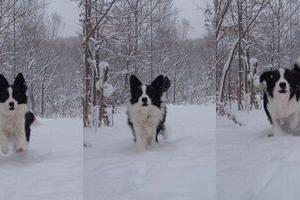 雪って楽しいー!!