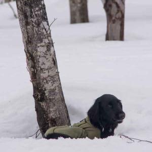 みなかみ雪遊び