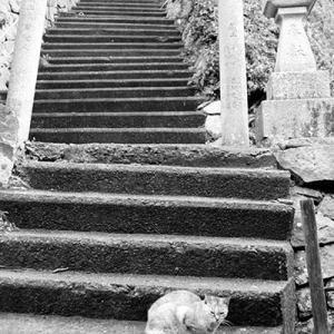 Vol.3429 愛媛県長浜町 青島 その10 北の集落