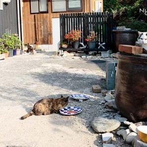 Vol.3479 愛知県佐久島 その12 猫島と思うと