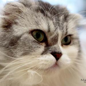 Vol.3500 名古屋市熱田 ねこの城 その6 魅惑の猫たち