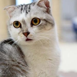 Vol.3545 大阪関目 保護猫サロンGOO その9 大阪庶民派猫カフェ