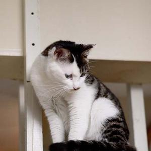 Vol.3548 大阪鴨野 保護猫サロンにゃんにゃ その3 視線の先