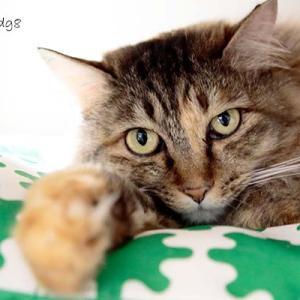 Vol.3551 大阪緑橋 保護猫サロンにゃんにゃ その6 近寄ってみる