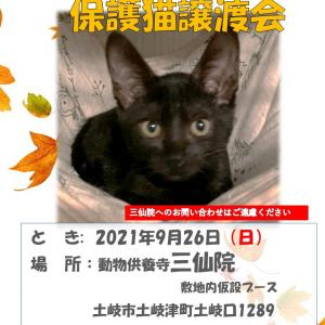 2021年9月26日は【土岐市三仙院】で保護猫譲渡会を開催します。