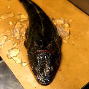 白身魚は2種