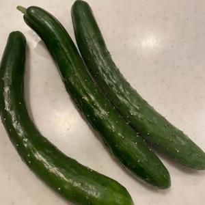 1日に必要な野菜が採れる現場