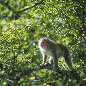 野猿と遭遇する日