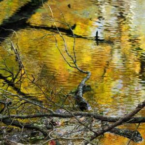泉門池 秋の色