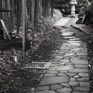 超久しぶりの赤塚植物園