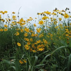 雑草を撮る22 栽培してはいけない