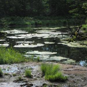 お久しぶり 泉門池