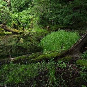 山滴る泉門池