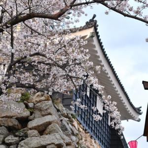 平成最後のお花見。もう少し楽しめそう!!(浜松城)