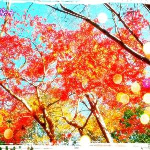 今更の紅葉(^^;)