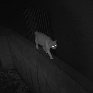 監視カメラにネコ
