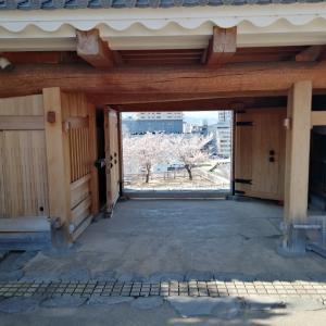 甲府城の桜(その2)