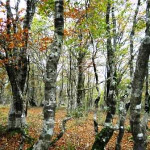 ヒガンバナ咲く秋