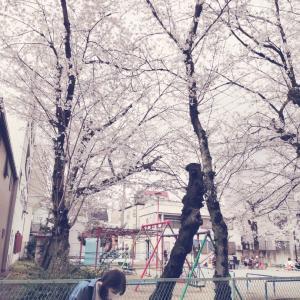 ぼっち桜を見る会