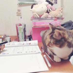 おうちで勉強!