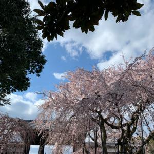 [桜コレクション2020]その1
