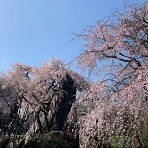 [桜コレクション]その2