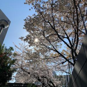 [桜コレクション2020]その3