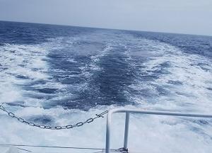 クジラを求めて国境の海へ