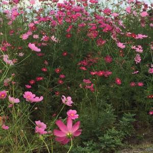"""【WakAAbeL】英文。FlowerRoad."""