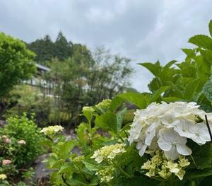 お寺には雨が似合う in 岩松院