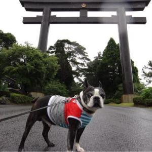 ワンコと霧島神宮へ行ってきた〜大分・宮崎篇・その4、ちょこっと鹿児島〜
