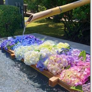 紫陽花、味彩。