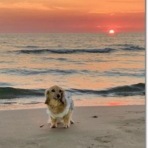 夕陽が沈む5分前 ~千里浜海岸