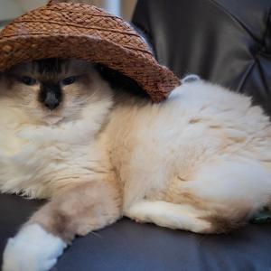 帽子はちゃんと被るもの