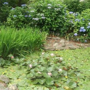 小平あじさい公園で出会った紫陽花たち