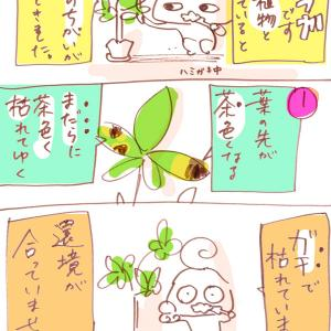 【ゆうか】植物の葉の枯れかた
