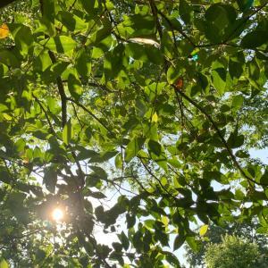 水無月のお朔日。未来の種を植えること、横繋がりを大切に。。。