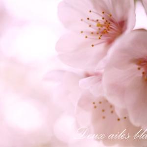 大好きな花は桜、心は武士道