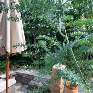 【ガーデンリノベーション】お庭の大改造にむけて