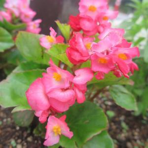 サンバレーに咲く!季節のお花たち!