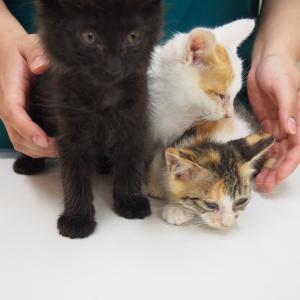 保護猫ちゃん多いです