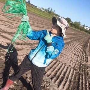 【さちえ】です~≪遠藤農場産 掘りたて  新Ecoじゃがセット≫ &畑管理お仕事( ゚Д゚)