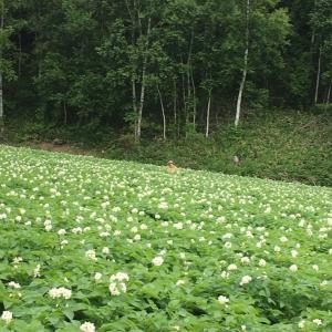 【さちえ】です~好きな農作業!(*^^)v