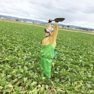 【さちえ】です~採取!土壌診断用の土~('◇')ゞ