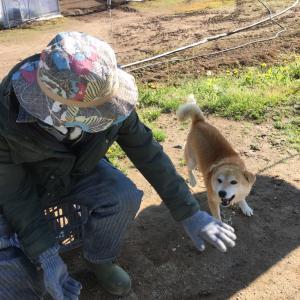 【さちえ】です~イキイキ柴犬てつくん写真(*^-^*)