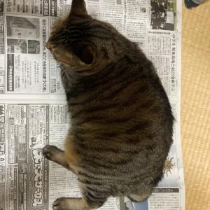 中日新聞に乘る。