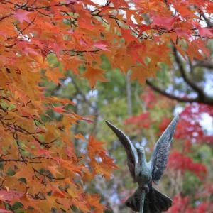 紅葉と野鳥達です。