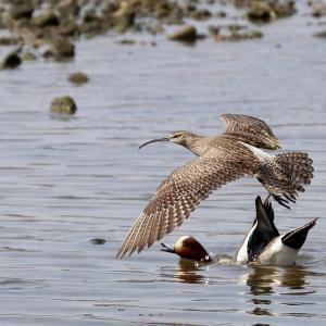 中州は野鳥の餌場の様ですね。