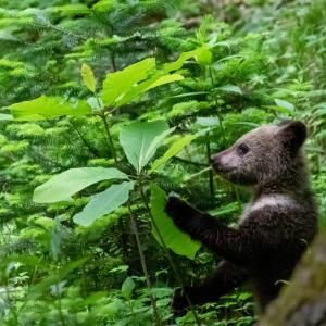 悶絶キュート!!子熊の兄弟!!(゚∀゚)ノ